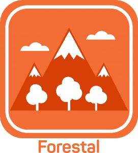 Técnico Forestal
